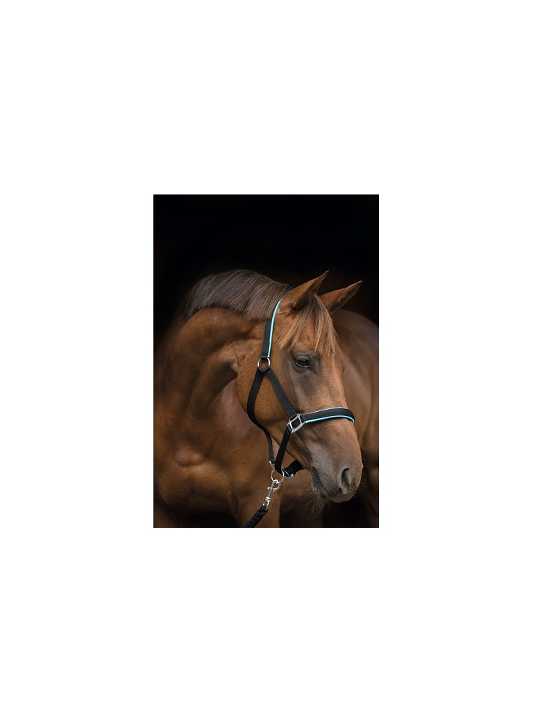 Cavezza SUPREME pony